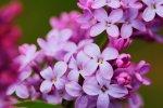 Wonach sollen wir erkundigen um kluge Entscheidungen in Gebiet von Fototapeten mit Blumen zu treffen?